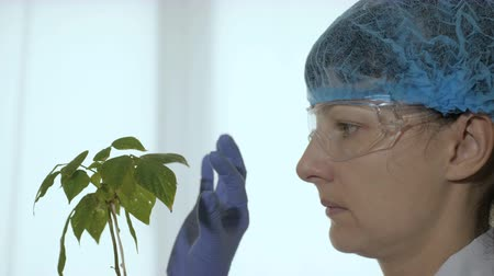 soya : Biologist examines sample. Science, biology, ecology. Professional scientist in his laboratory. Woman scientist looks at a plant of soy.
