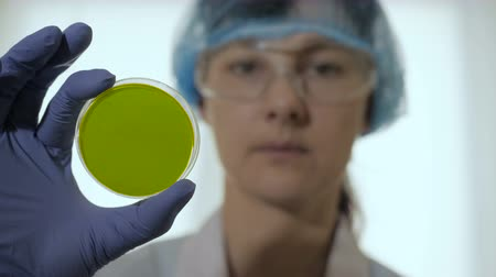 hromakey : Woman scientist take petri dish in the laboratory. Petri dish green screen. Portrait of a woman confident in his working environment.