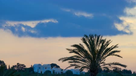 tunus : Sunset over white houses and palms. Silhouette of a palm tree over the sunset. Time Lapse. Timelapse. Stok Video