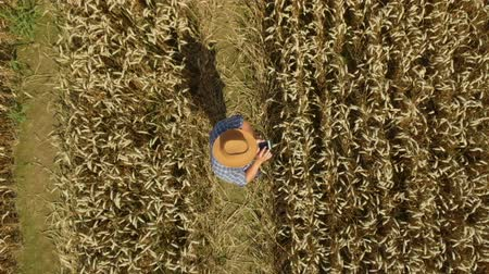 мониторинг : Zoom Man Hat in Young Wheat Field and Examining Crop. Aerial View Directly Above a Farmer Monitoring His Wheat With Tablet. Wheat Field Farmer Landscape Nature Agriculture Growth Drone Footage Man. Стоковые видеозаписи