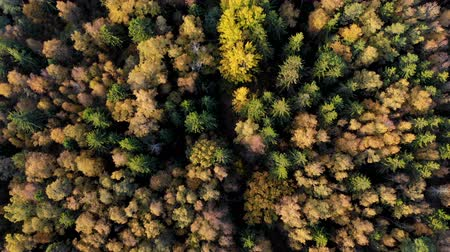 lombhullató : Autumn Colorful Forest From Above, Captured with Drone. Fall Orange, Green, Yellow, Red Leaves Trees Woods. Aerial View Flying Above Stunning Colorful Treetops with Bright Leaves on Sunny Day. Stock mozgókép