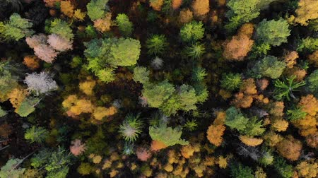 outonal : Autumn Colorful Forest From Above, Captured with Drone. Fall Orange, Green, Yellow, Red Leaves Trees Woods. Aerial View Flying Above Stunning Colorful Treetops with Bright Leaves on Sunny Day. Vídeos