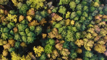 boomtoppen : Autumn Colorful Forest From Above, Captured with Drone. Fall Orange, Green, Yellow, Red Leaves Trees Woods. Aerial View Flying Above Stunning Colorful Treetops with Bright Leaves on Sunny Day. Stockvideo