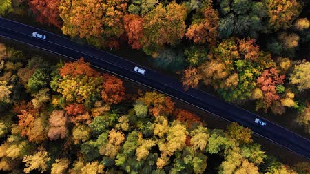 cam : Aerial View Above Road in Forest in Fall With Cars. Aerial Top View Over Straight Road With Cars in Colorful Countryside Autumn Forest. Fall Orange, Green, Yellow, Red Leaves Trees Woods.