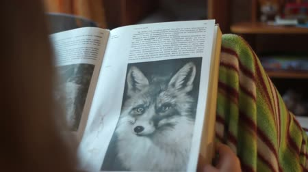 ansiklopedi : Reading Books About Foxes Stok Video
