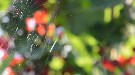 tricky : The very gentle breeze blowing to spiderweb.