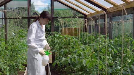 деревце : Handling of prototypes of tomatoes in the greenhouse. A young woman in a white coat sprinkles plants with a special solution for the prevention and control of agricultural pests and diseases. Стоковые видеозаписи