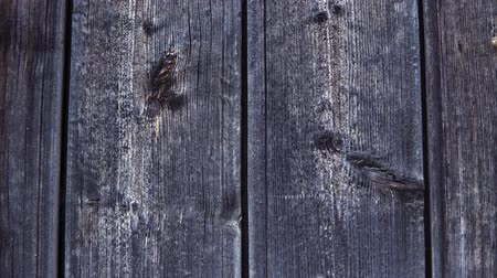 wood panel : The old gray wood is darkened from time to board with knots, a wooden vintage background, the camera moves from left to right.