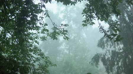torrential rain : Strong torrential rain, rainwater streams reduce visibility, tree branches are swinging from the gusts of the wind, a storm warning. View from the window to the park. Stock Footage