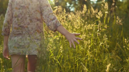 pioppo : A young woman is walking in a meadow. The female hand touches the high stems of the grass, fluffy seeds float in the golden rays of the sun.
