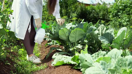 nezralý : A female lab technician studies the resistance of cabbage varieties to agricultural pests in the experimental territory of the agrocomplex. The worker treats leaves of plants with a repellent solution