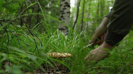 musgo : Autumn gathering of mushrooms in the forest, young man squats and cuts the mushroom with a knife.