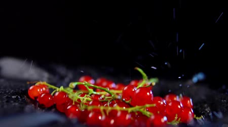 смородина : Close-up of ripe red currant berries jumping with drops of water on a black background, slow-motion shooting.