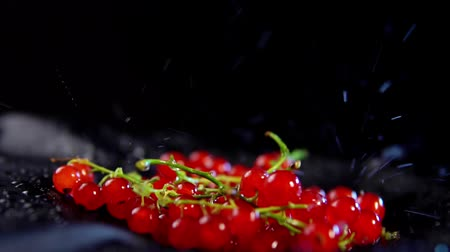 красная смородина : Close-up of ripe red currant berries jumping with drops of water on a black background, slow-motion shooting.