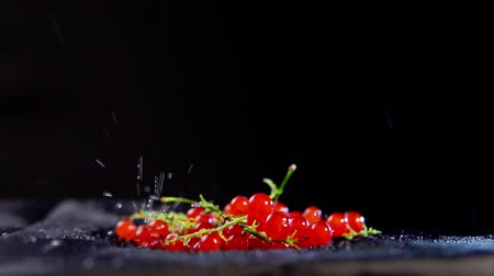 shluk : Close-up of ripe red currant berries jumping with drops of water on a black background, slow-motion shooting.