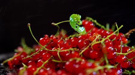 смородина : Red currants berries rotate against a black background, slow motion. Стоковые видеозаписи