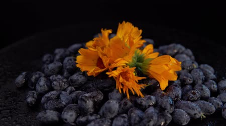 marigolds : Dark honeysuckle berries and orange calendula flowers rotate counter-clockwise against a black background. Stock Footage