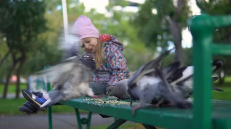 kabuksuz tahıl : Little European girl feeding street pigeons with grain in the autumn park, slow motion. Birds eat yellow groats on a green bench.