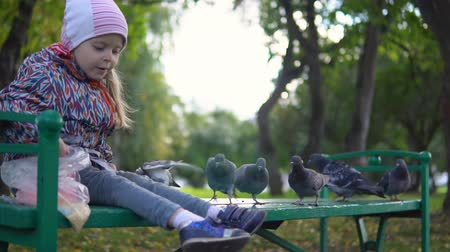 przedszkolak : Little European girl feeding street pigeons with grain in the autumn park, slow motion. A happy female child throws a groats to the birds.