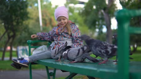 free throw : Little cute girl feeding street pigeons with grain in autumn park. A happy child throws seeds so that the birds eat yellow croup on a green bench, slow motion.