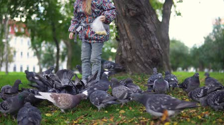 kabuksuz tahıl : Little European child feeding street pigeons with grain in the autumn park. A happy kid, being among the doves and throwing grain. Stok Video