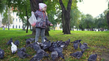 hejno : Little European girl feeding street pigeons with grain in the autumn park. A happy kid, being among the doves and throwing grain.
