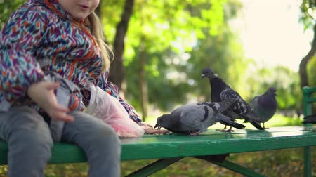 przedszkolak : Little girl feeding street pigeons with grain in the autumn park. A happy female kid holds the groats on his palm, the birds are gently eaten from her hands, close-up.