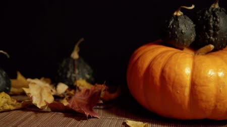 kalebas : A large orange pumpkin stands on the table along with small pupyrchatymi green pumpkins among the red maple leaves, the movement of the camera right to left. Stockvideo