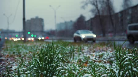 snow on grass : Early cold, white snow on green grass on the background of the highway. Blurred cars drive carefully on a wet road with lighted headlights.