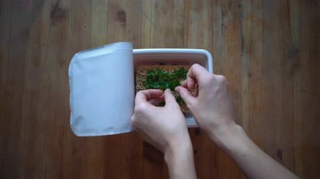 fideo : Top view of cooking instant noodles, female hands pours pieces green onion into cup with instant noodles on wooden table. Greenery lies in the shape of a heart. Archivo de Video