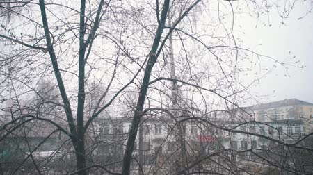 hoe : Slow motion of wet sticky cold snow comes and clings to the branches of trees with small young green leaves. Concept spring freezing how naturals disaster. Stockvideo