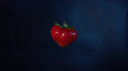 výřez : Close-up of one red ripe strawberry turns itself, seamless loop. Fresh juicy berry isolated on dark blue background. Dostupné videozáznamy