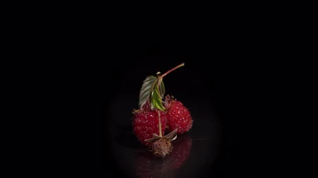 infinito : Close-up of three red ripe raspberries are turning around on a mirror surface, seamless loops. Fresh juicy berries isolated on a black background.