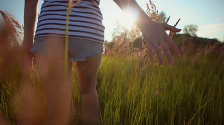 handheld shot : View back of young woman walks along field among dry grass she touches golden ripe ears of wild herbs with her hands.Girl dressed in denim shorts goes through the meadow.