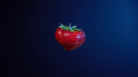 black berry : Close-up of one red ripe strawberry turns around itself, seamless loop. Fresh juicy berry isolated on dark blue background.