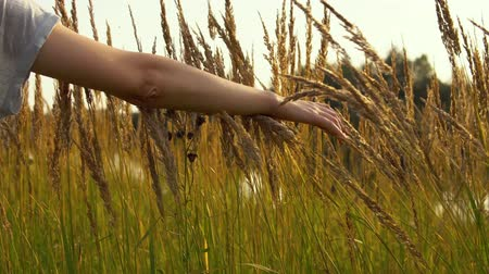 geliştirmek : A female hand touches a ripe golden spikelets of wild grass, the river water glistens through flowering herbs.