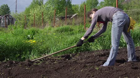 leveling : Woman farmer levels the ground with metal rake with wooden handle, preparing for planting in the sunny afternoon. Female grower loosens the soil removes weeds and roots.