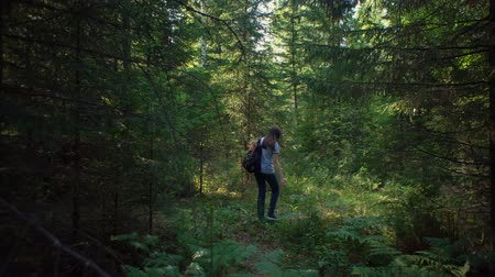 orange t shirt : View back of a young brunette woman in a striped t shirt with an orange backpack walking through a coniferous forest. Stock Footage