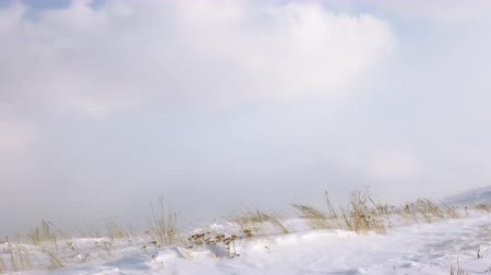 hófúvás : Strong blowing carries loose small ice and bends dry yellowed grass against the clouds sky, ground blizzard without snowfall with drifting snow in the mountains.