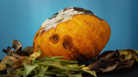 apodrecendo : Organic waste rotate on a blue background, rotting pumpkin along with green potato tubers with sprouts, dry peel bananas and apples decomposes into compost.