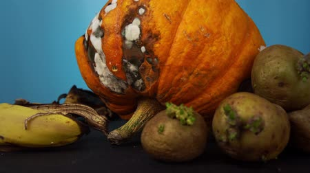apodrecendo : Close up of rotting pumpkin along with green potato tubers with sprouts, dry peel bananas and apples rotate on a blue background, organic waste decomposes into compost.