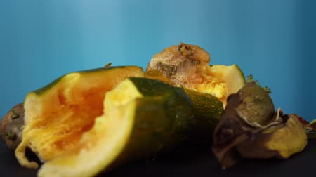 apodrecendo : Rotting zucchini together with green potato tubers with sprouts rotate on a blue background, excessive consumption of food and violation of the conditions for storing vegetables, close-up.