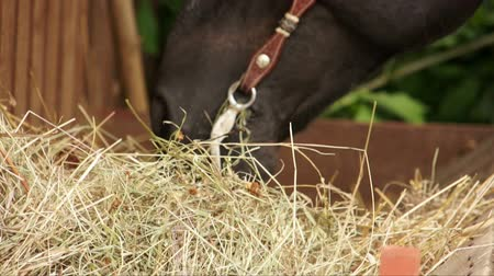 cape wheel : Horse chewing hay at rancho