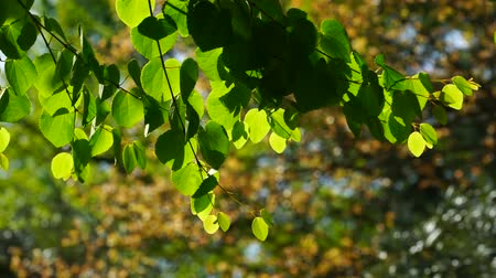 Green leaves on tree branch on blurred background.
