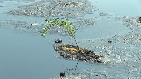 contaminação : Tree threatened by oil and Toxic Substances. Effects of nature from water contaminated with chemicals and oil. Environmental disaster, contamination of the environment.