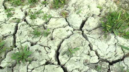 dirt : Summer drought, drying up the soil, climate change, environmental disaster, death for plants and animals, soil degradation, desertification, Czech Republic, Europe