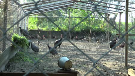 rozsáhlý : Cage for extensive breeding of turkeys Meleagris, pheasants, helmeted guineafowl Numida and other poultry. Breeding for conservation of the genofond and partly for hunting meat and sale
