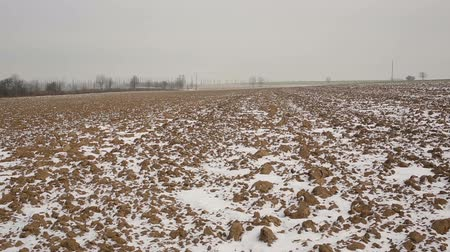 forrado : Plowed arable field winter lined with a small layer covered of snow, solitary trees poplars and beautiful, the protected landscape area of Poodri, Europe Vídeos