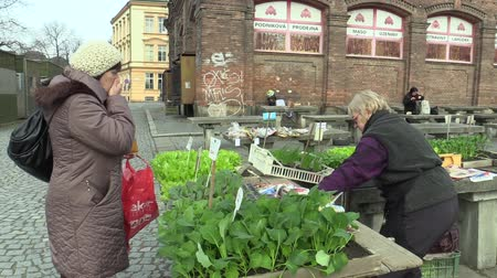 chives : OLOMOUC, CZECH REPUBLIC, MARCH 30, 2018: Market sale of lettuce, green salad, kohlrabi and chives in the greenhouse seedlings transplant, tradition in the city of Olomouc, gardening, bio quality