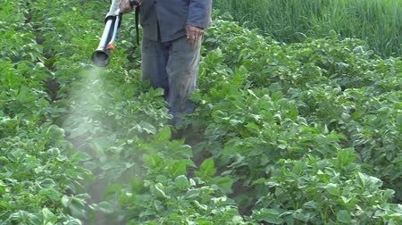 especially : Chemical pesticide modern spray of Solanum tuberosum potato against Leptinotarsa decemlineata potato colorado beetle, the device is using man mist blower spraying